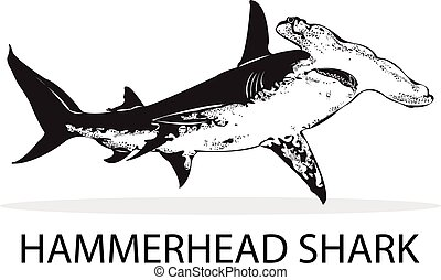 Shark. - Hammerhead Shark.