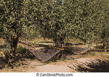 hammock netting on a tree in the park