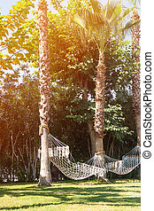 Hammock on the palm trees in a hotel.
