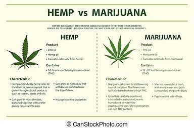 hamp, marijuana, infographic, horisontale, vs.