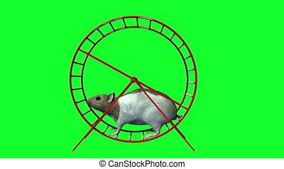 Videos hamster free Mobile: Profile