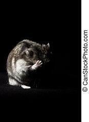 Hamster, desesperado