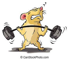 hamster, edifício corpo, treinamento