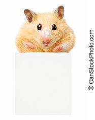 Hamster hold empty white poster