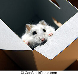 Hamster in a box - White dwarf hamster standing up in a box