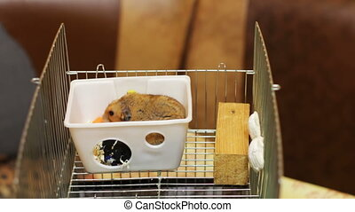 Hamster in a Cage and Black Cat - Home fat hamster sitting...