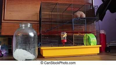 hamster in a cage and home environment.