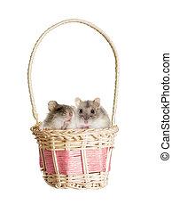 hamster, in, a, korb