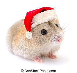 Hamster in a red Santa Claus hat. - Hamster in a red Santa ...