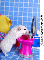 hamster in the bathroom
