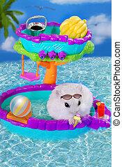 hamster on summer holidays
