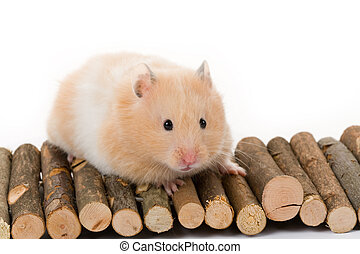 hamster, ours, teddy