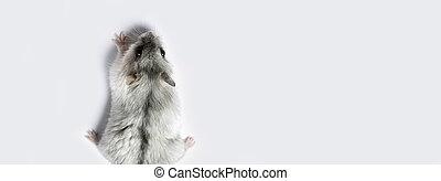 hamster panoramic mockup