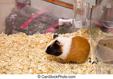 Hamster - Photo of nice hamster in the sawdust