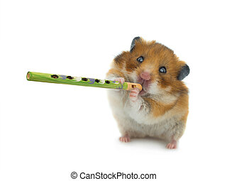 hamster plays sopilke isolated