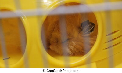 Hamster sleeping in cage 19113_01