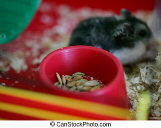 hamster eating in cage