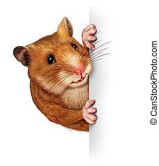 hamster, tenue, a, vide, carte