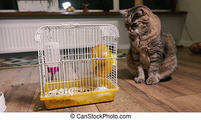 hamsters, chat, cage, pets., regarde, live.