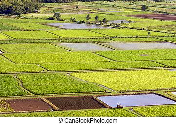 Hanalei Valley and Taro Fields
