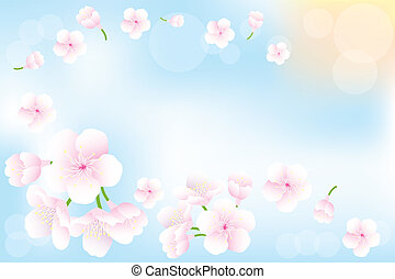Hanami - Cherry blossoms background - Flying cherry-blossoms...