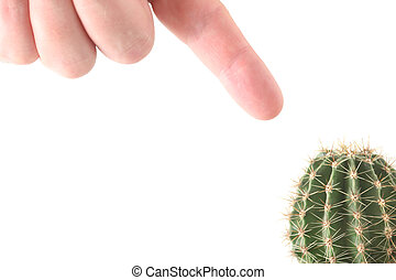 Hand and cactus isolated on white