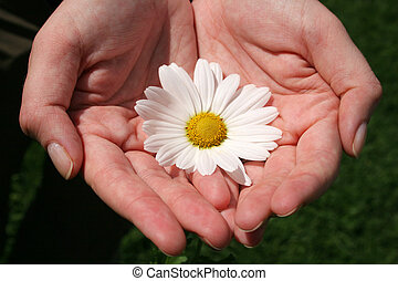 Hand and Flowers - Cupped hands holding white flower
