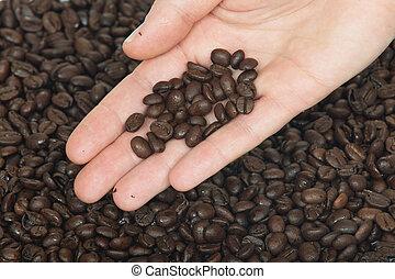 Hand and fresh roasted coffee bean