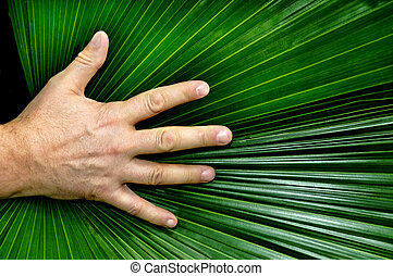 A man's hand resting on a palmate pond frond.