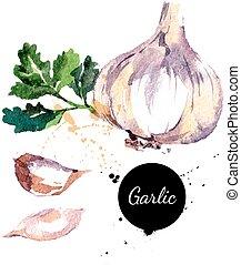 hand, aquarell, hintergrund., vect, gezeichnet, weißes, gemälde, garlic.
