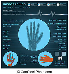 Hand Bone Infographic Infocharts Health And Medical