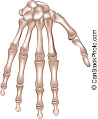 Bones of the right hand. Detailed medical illustration. Isolated on a white background. Realistic and accurate design.