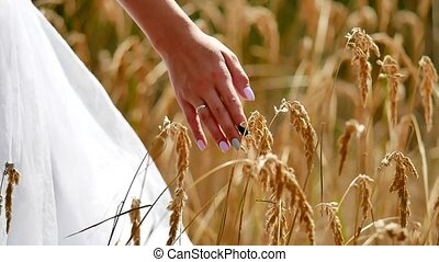 Hand bride on Grass Field In Sunset. Close up woman hand...