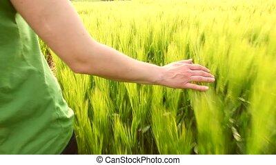 hand caressing wheat slomo - slow motion women walking in...