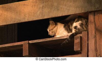 Hand cuddling a cute village cat in Bagan, Myanmar - Medium...