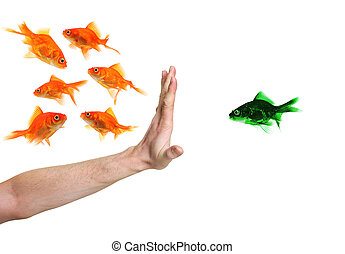 hand discriminating green goldfish isolated on white