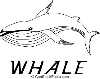 hand draw a whale