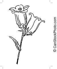 campanula - hand draw, sketch illustration of campanula