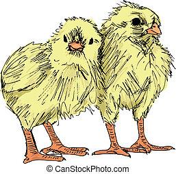 Hand draw sketch of Chicken. Vector