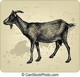 hand-drawing., ベクトル, 角, illustration., goat
