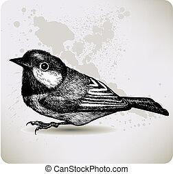 hand-drawing., ベクトル, illustration., titmouse, 鳥
