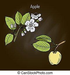 Hand drawing apple tree branch
