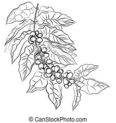 coffee - hand drawing branch of coffee