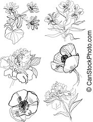 Hand drawing flowers set