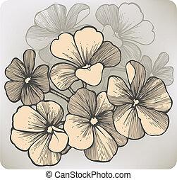 hand-drawing., géranium, vecteur, fleur, illustration.