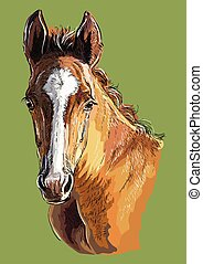 Hand drawing horse portrait vector 29