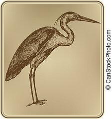 hand-drawing., oiseau, vecteur, illustration., héron