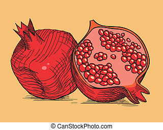 hand drawing pomegranate - hand drawing red fresh...