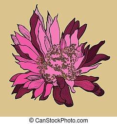 hand-drawing., vecteur, cactus, illustration., fleur