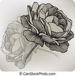 hand-drawing., vecteur, illustration., rose, fleurir